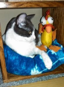 sam and chicken