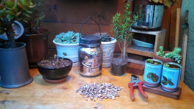 71314 seed pile