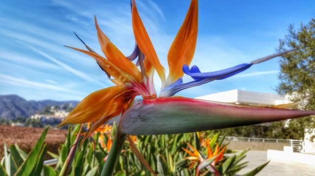 101114 Getty fleur